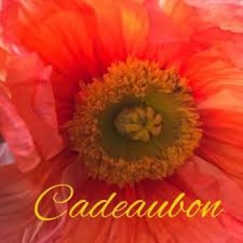KADOBON 25 �
